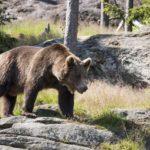 熊出没情報